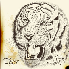 Hand drawn vector  portrait of tiger in vintage style