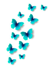 Butterflies on white background.
