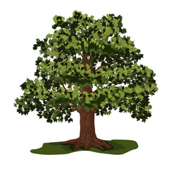 oak tree with green leaves