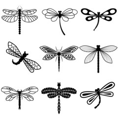 Dragonflies, black silhouettes on white background