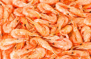 Shrimp cocktail background