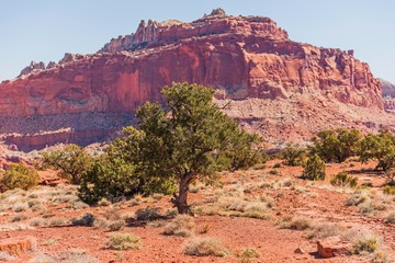 Wall Mural - Utah State Rocky Formation