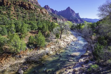 Wall Mural - Spring in Zion National Park
