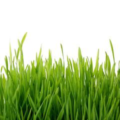 Fresh thick grass closeup