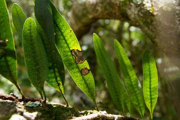 Amazon Rain Forest Leaves