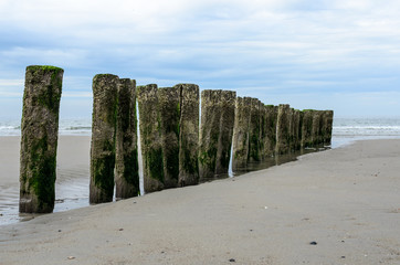 Canvas Print - Wooden breakwaters on the beach in Nieuw Haamstede Zeeland