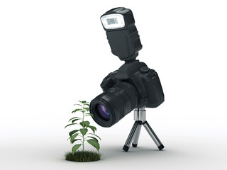 photo camera and plant