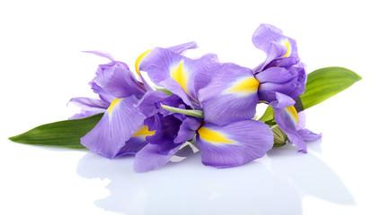 Beautiful iris flower isolated on white