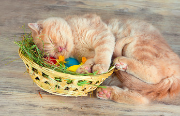 Little cream kitten sleeping on the basket with colored eggs