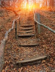 Foto auf Acrylglas Treppe wooden stars in autumn forest