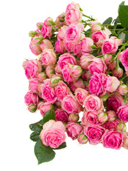 pile of fresh pink roses