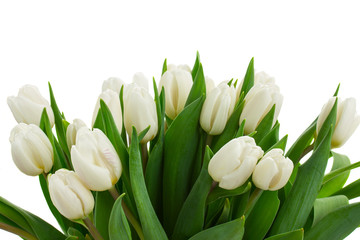 bunch of white tulips close up