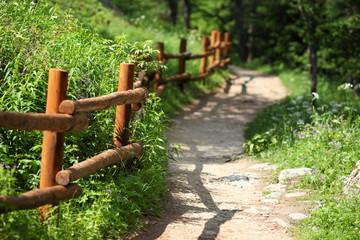 Keuken foto achterwand Weg in bos chemin de randonnée