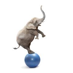 African elephant elephant balancing on a ball.