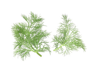 Dill herb leaves.