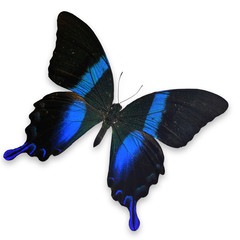 Beautiful Blue and Green butterfly