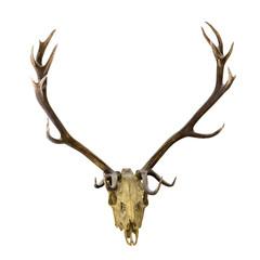 deer dark antlers with skull on white