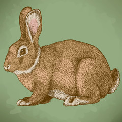 vector engraving rabbit in color