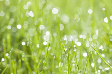 green grass with water dew