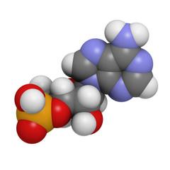 Cyclic adenosine monophosphate (cAMP) molecule.