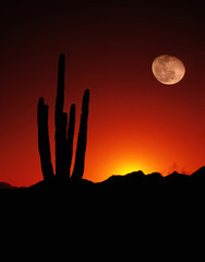 Vertical Desert Saguaro Cactus Full Moon Sunset American SW
