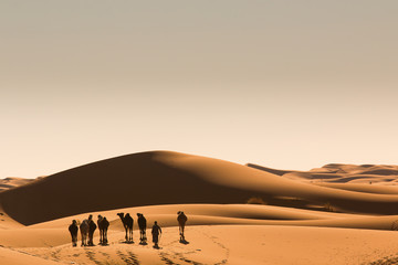 Sahara desert sand dunes morocco nomad Berber camel