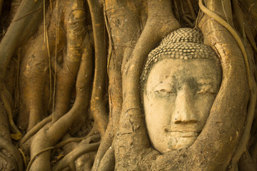 Close-up Head of Buddha in the roots of the tree.