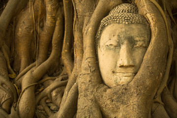 Close-up Buddha head in the roots of the tree .