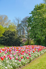Wall Mural - Albert Park with Tulips