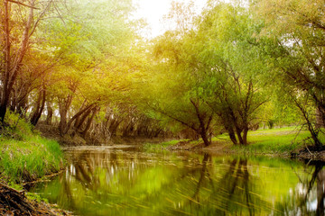 River Zagyva after rain
