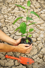 planting tree / growing a tree / love nature / heal the world