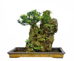 Rock bonsai isolated on white