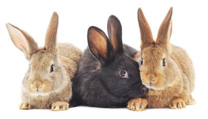 Rabbits Wall mural