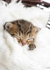 tabby kitten sleeping