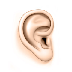 human ear isolated on a white background