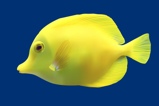 Yellow tropical fish. Vector illustration