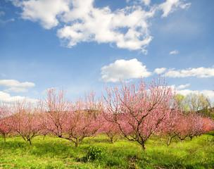 spring tree garden