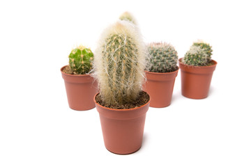 Collection of cactus, isolated on white