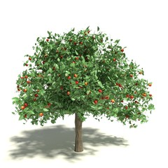 3d illustration of an apple tree