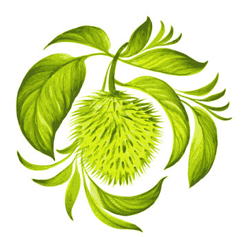 decorative ornament soursop with leaves