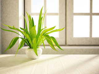 plant is standing near the window