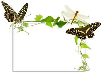 page bucolique : vigne, papillons, libellule