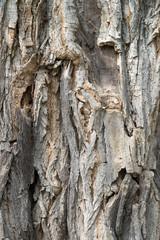 Baumrinde Hintergrund