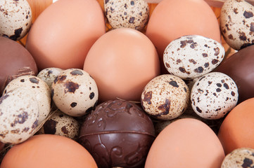 chicken, quail and chocolate eggs