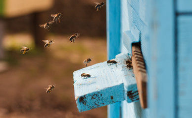 bees flying into the hive