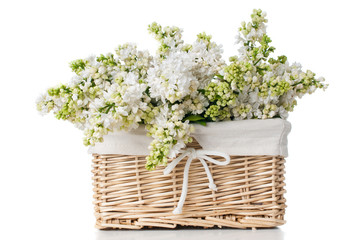 white lilac flowers in a basket isolated