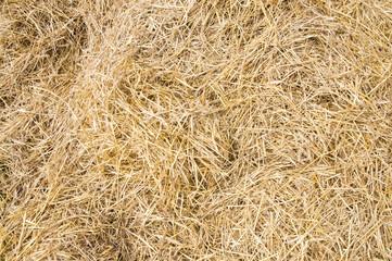 Texture hay closeup in color.