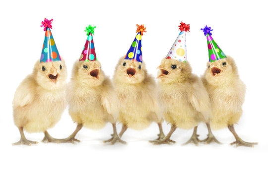 Yellow Baby Chicks Singing Happy Birthday