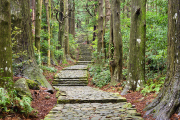 Photo Stands Road in forest Kumano Kodo, Sacred Trail in Wakayama, Japan