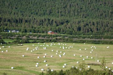Bundles of straw on the field after harvest in Norway